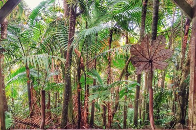 Take A Hike: El Yunque National Rainforest