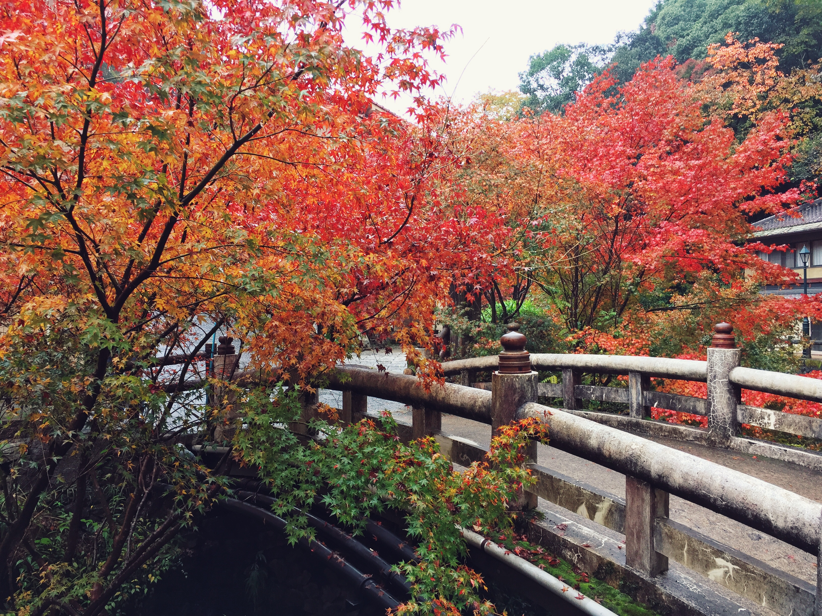 osaka-autumn-bridge